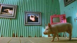The Joy of Pigs
