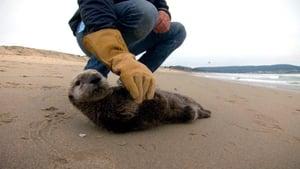Saving Otter 501