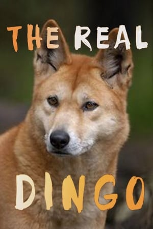 The real Dingo