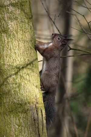 Geheimnisvolle Eichhörnchen