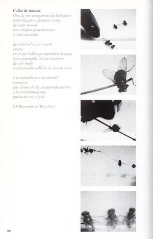 Collar de moscas