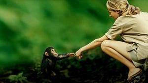 Jane: a Mãe dos Chimpanzés