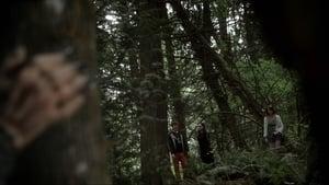 Lovecraft's Woods
