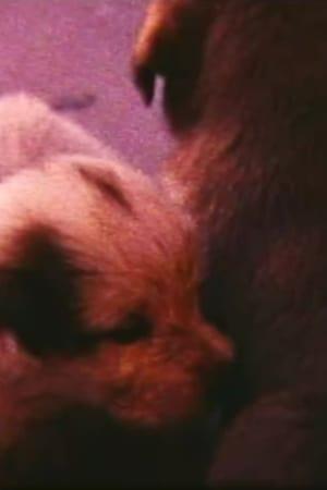 Pup Birth