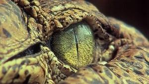 The Reptiles: Alligators and Crocodiles