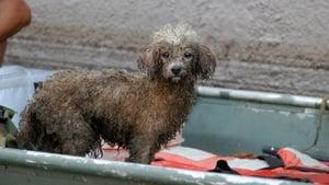 Katrina's Animal Rescue