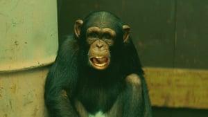 Monkey Largo