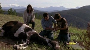 Heartland Season 3 :Episode 9  Broken Arrow