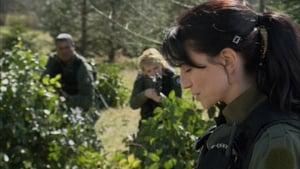 Acum vezi Insiders Poarta Stelară SG-1 episodul HD