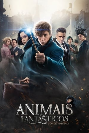 Animais Fantásticos e Onde Habitam Torrent, Download, movie, filme, poster