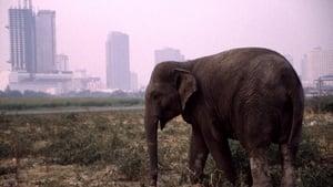 The Urban Elephant