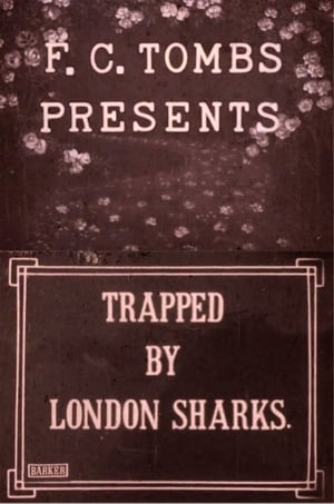 Trapped by London Sharks