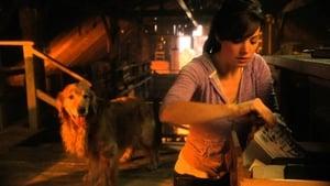 Smallville Temporada 10 Episodio 8