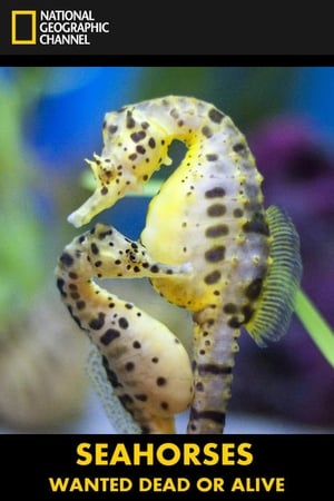 Seahorses: Wanted Dead or Alive
