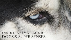 Inside Animal Minds: Dogs & Super Senses