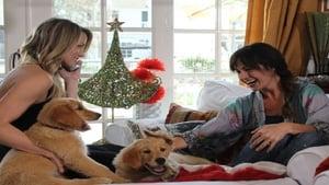 De l'amour pour Noël