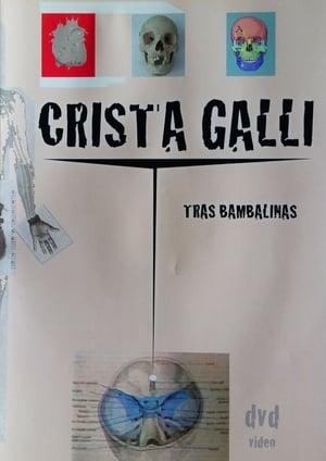 Crista Galli: Tras Bambalinas