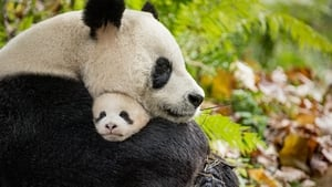 Captura de Disneynature: Nacidos en China