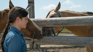 Heartland Season 9 :Episode 8  Reckless Abandon