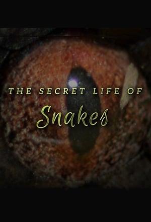The Secret Life of Snakes (2016)