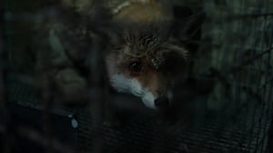 Spoor – Pokot (2017) Full Movie