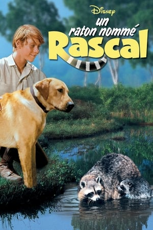 Un raton nommé rascal