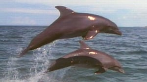 Dolphins: Close Encounters