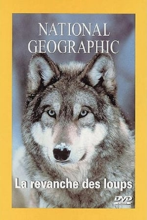National Geographic : La Revanche des loups