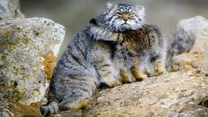 Big Cats 1×2
