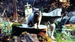 Captura de El cementerio viviente(1989) HD 1080P Dual Latino-Ingles