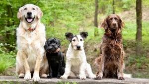 Dog Tales