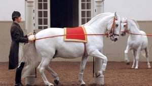 Legendary White Stallions
