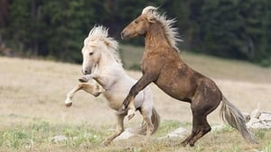 Cloud's Legacy: The Wild Stallion Returns