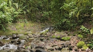 Captura de Weltnaturerbe Panama – La Amistad Nationalpark