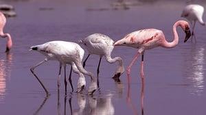 Kalahari: The Flooded Desert (2)