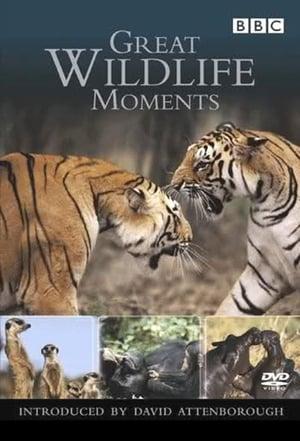 Great Wildlife Moments