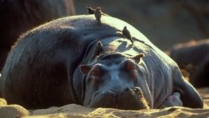 Hippo Beach