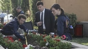 Bones Season 6 : The Pinocchio in the Planter