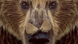 Cantábrico: Los dominios del oso pardo Castellano