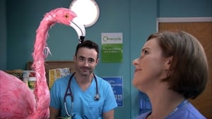 Holby City Season 17 :Episode 27  Go the Distance