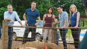 Hawaii 5-0 saison 6 episode 9