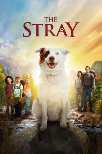 watch The Stray online
