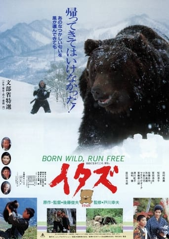 Poster of The Forest of the Little Bear