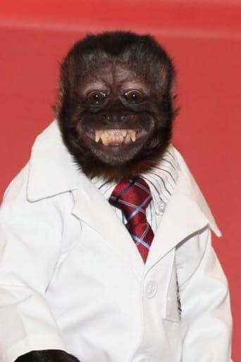 Image of Crystal the Monkey