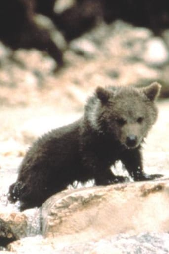 Youk the Bear