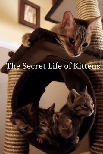 Poster of The Secret Life of Kittens