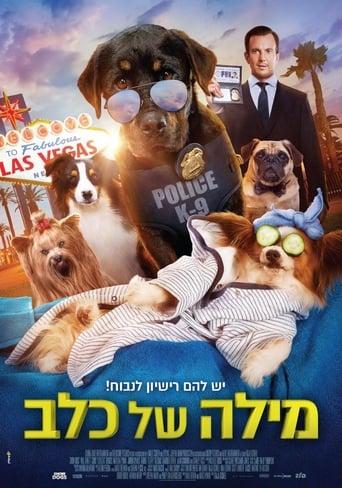 Cães à Solta