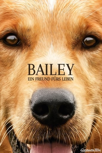 Filmplakat von Bailey - Ein Freund fürs Leben