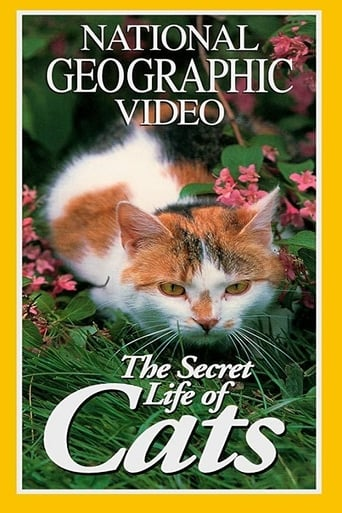 Poster of 猫的秘密生活