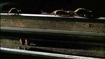 Les Rats